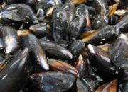 mussels-close-up