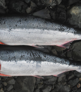 Sockeye inventory moving but market remains unstable