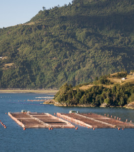 Salmon pens, Chile. Photo: Sam Beebe, Ecotrust