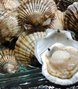 scallop-top-pic