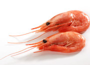 coldwater shrimp