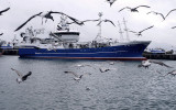 Scottish Pelagic Sustainability Group (SPSG) Herring Fishery. Photo: Marine Stewardship Council.