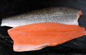 SalmonChile: Chilean salmon has no traces of antibiotics
