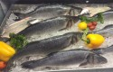 Seabass at Kilic's stand at the 2015 Seafood Seafood Expo North America show. Matt Whittaker/Undercurrent News