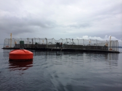 Marine Harvest's experimental salmon farm in Huenquahile, Chile