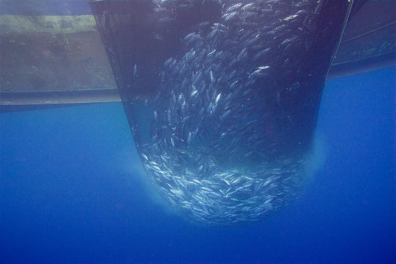 Three major Ecuadorian tuna firms join forces with WWF for MSC ...