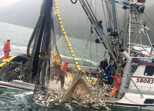 Alaska salmon sector optimistic about 2018 undercurrent news for Alaska commercial fishing jobs