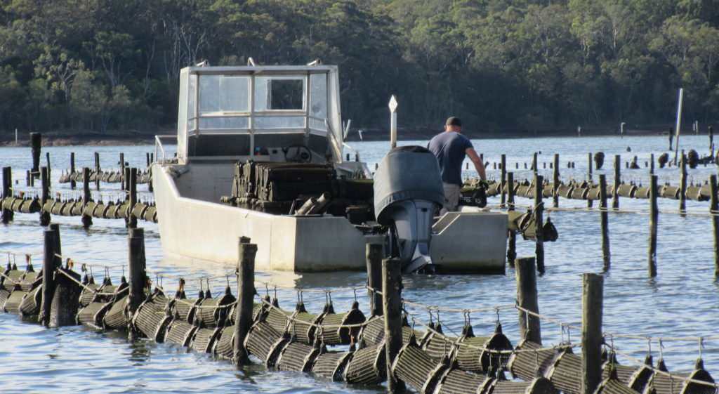 Australian oyster farm. Credit: Susan Fitzer