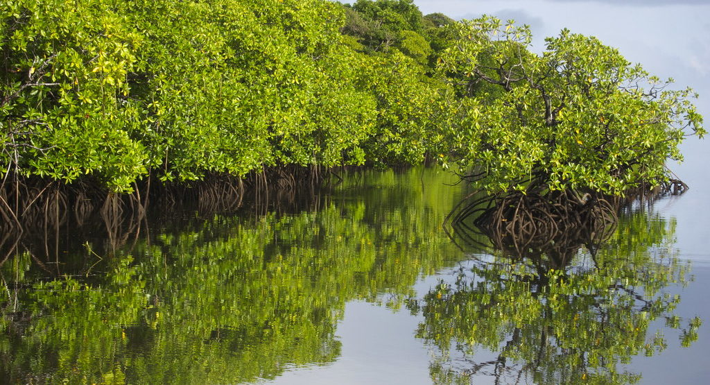 Indonesia's Mangroves